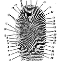Fingerprint Diagram, 1940 by Science Source