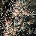 Fireworks On Bastille Day by Sami Sarkis