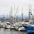 Fishing Boats In Pillar Point Harbor At Half Moon Bay California . 7d8208 by Wingsdomain Art and Photography