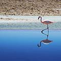 Flamingo by MaCnuel