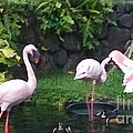 Flamingo Party by Silvie Kendall