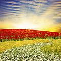 Floral Field On Sunset by Setsiri Silapasuwanchai