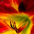 Floral Macro Of A Blossom by Floyd Menezes