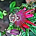 Flower Painting 0001 by Metro DC Photography
