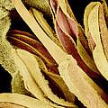 Flower Reproductive Parts, Sem by Susumu Nishinaga