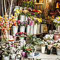 Flower Shop by Heather Applegate