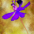 Flower Take Flight by Judi Bagwell