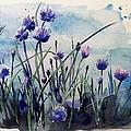 Flowering Chives by Stephanie Aarons