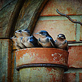 Flowerpot Swallows by Jai Johnson