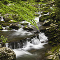 Flowing Mountain Stream by Andrew Soundarajan