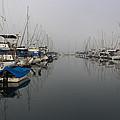 Foggy Morn by Heidi Smith