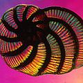 Foraminifer by Eric V. Grave