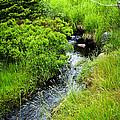 Forest Creek In Newfoundland by Elena Elisseeva