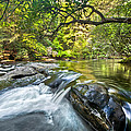 Forest Jewel by Debra and Dave Vanderlaan