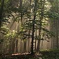 Forest by Odon Czintos