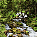 Forest Stream In Tatra Mountains by Artur Bogacki