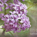 Fragrant Purple Lilac by Cheryl Davis
