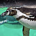 Freestyle Swimming by Ellen van Bodegom
