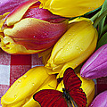Fresh Tulips And Red Butterfly by Garry Gay