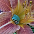 Frog In The Day Lilly by Jeremiah Colley