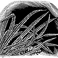 Frost On Blades Of Grass, Woodcut by Gary Hincks