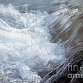 Froth by Sharon Talson