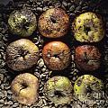 Frozen Apples by Bernard Jaubert