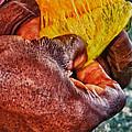 Fruity Mango by Daniel Marcion