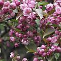 Full Blossom by Erika Betts