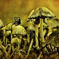 Fungus World by Chris Lord