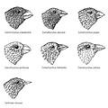 Galapagos Finches, Artwork by Gary Hincks