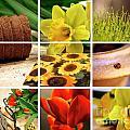 Garden Collage by Sandra Cunningham