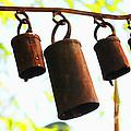 Garden Noah Bells 2 by Cheryl Young