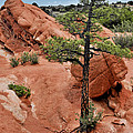 Garden of the Gods  - The name says it all Poster by Christine Till
