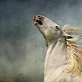 Georgiano Cavalli by Dorota Kudyba