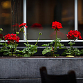 Geranium Flower Box by Doug Sturgess