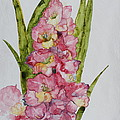 Gladiolas by Patsy Sharpe