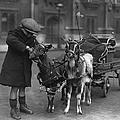 Goat Cart by Fox Photos