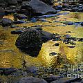 Golden Fall Reflection Print by Heather Kirk