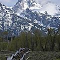 Grand Teton Fence by Charles Warren