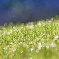 Grass, Close-up by Tony Cordoza