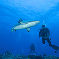 Gray Reef Shark With Divers, Papua New by Steve Jones