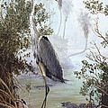 Great Blue Heron Print by KEVIN BRANT