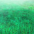 Green Grass by Lolita Bronzini