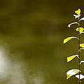 Green Morning by LeeAnn McLaneGoetz McLaneGoetzStudioLLCcom