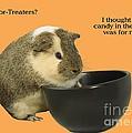 Guinea Pig trick-or-treat