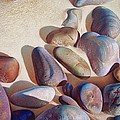 Hallett Cove's Stones - Detail by Elena Kolotusha