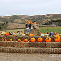 Halloween Pumpkin Patch 7d8478 by Wingsdomain Art and Photography