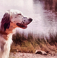Handsome Hunter. English Setter by Jenny Rainbow