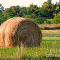 Haybale by Louise Peardon